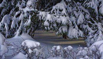 Зима в Берлюках